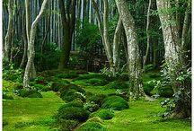 Greenery / by Jake Goldsmith