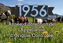 Fromages AOP d'Auvergne