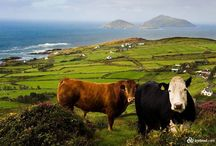 Ireland / Resources, guides and sight-seeing ideas for our next adventure