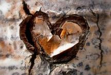 """still life / """"Une vanité est une catégorie particulière de nature morte dont la composition allégorique suggère que l'existence terrestre est vide, vaine, la vie humaine précaire et de peu d'importance. Le message est de méditer sur la nature passagère et vaine (d'où « vanité ») de la vie humaine, l'inutilité des plaisirs du monde face à la mort qui guette."""""""