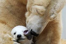 Animal Motherly Love / There's True Beauty in the Instinct of Animals and the Love they have for Their Babies / by Melody