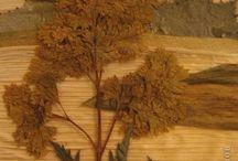 картины. Листья, трава, шишки...