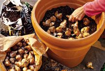 Fall Bulb Planting Tips and Ideas / by Debbie Bookstaber: Mamanista.com, Bloganthropy.org