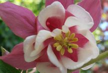 Blommor och blader / Bilder jag tagit i min omgivning