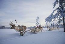 Levi/Lappland