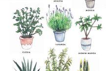 Mis plantas mi gente