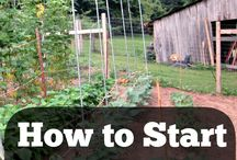 Homesteading / Ideas for Jera Homestead. Our small little idea for an urban homestead for more sustainable living.