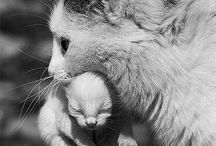 moms, dads, & babies - animal families