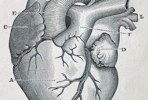 Heart illustrations