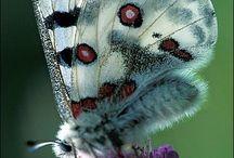 εїз butterflies εїз