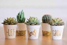 Cactos e suculentas / Essas lindas plantinhas vão deixar sua casa ainda mais linda, se inspire!