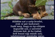 Állatok és kedvencek