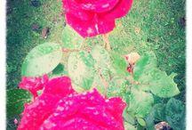 Garden and...