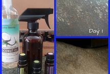 Horse recipes with essential oils
