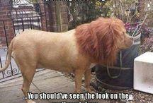 Pes ktorí vizerá ako lev