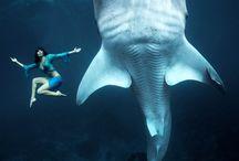 °0o Univers soumarin o0° / Plongez dans l'univers sou-marin lors de vos voyages et capturez les plus belles photos. Picthema vous présente les meilleures prises pour créer un livre photo. Jouez avec les couleurs des fonds marins, captez le mouvement de la faune et la de la flore aquatique.