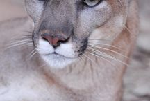 Bear Creek Feline Center / by Tyra Mefford