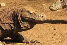 The natural beauty of Komodo National Park / Are you a nature enthusiast? Komodo National Park famous for the Komodo dragon but it has also much natural beauty, take the time to explore the islands and surround yourself in serenity…