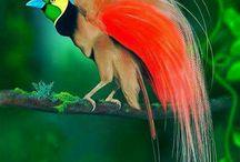 Birds of Paradise KdL365 / Artikel ini adalah tentang Burung keluarga Paradiseaeidea dari Ordo 'Passeriformes', dan untuk penggunaan lain, Sebagian besar spicies ditemukan di Timur Indonesia ke Papua Nugini dan Australia. Burung-Burung keluarga memiliki 42 spicies di 15 ganera, anggota keluarga-burung ini yang mungkin paling tahu untuk bulu laki-laki dari dimorfisme seksual spicies ''The Mayoritas'',Khususnya highty yang memanjang dan bulu-bulu eloborate yang membentang dari paruh, sayap dan tinggi kepala, Pacific Burung.
