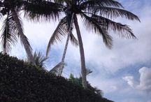 Palms, Trees / Landscape material
