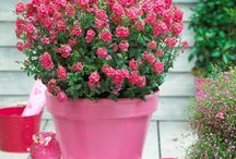 Container Garden Ideas / Not sure how to use Suntory flowers in your empty planters? This board will be your go-to! You can find links to the Virtual Suntory Container app, photos of complete planters, inspiration for each season, and container ideas for different parts of your yard.  / by Suntory Flowers