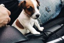 Puppies//