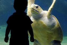 Save the Sea Turtles / Extinction is forever / by Carlyn Bullock