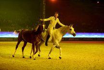 Gala D'Oro 2014 / #spettacolo di arte equestre  #cavalli #horses