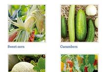 Garden-Herbs, Veggies & Fruits