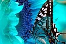 Butterfly pictures and tablets