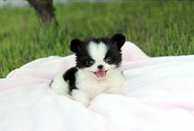 Puppies / Sooooo cute