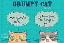 Gato Cool