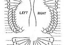 Křídla ptáků