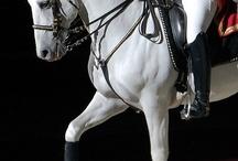 Lipizzanen Horses CZ