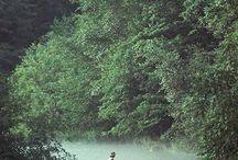 Fly Fishing / .