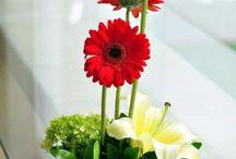 Floral gereberas