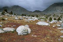 Tundra diorama