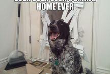 Makes me laugh ... :) / by Kathy Kennard