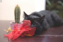 Black cats / by Fanny Corsain
