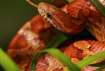 Käärmeet / Snakes