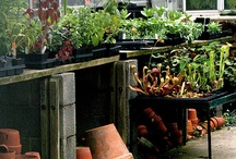 Magical Greenhouse / I love green things......