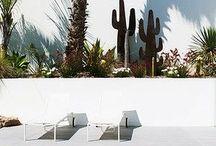 TRANSFORM YOUR GARDEN INTO A GLAMOROUS MID CENTURY OASIS. / http://www.madaboutmidcenturymodern.com/how-to-transform-your-garden-into-a-glamorous-mid-century-oasis/
