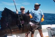 SAILFISH / Fly fishing for sailfish.  Sailfish on the fly.