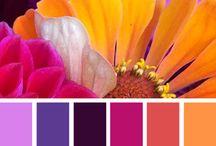 Renkler color