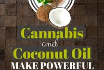 Cannabis & Coconut oil kills cancer cells
