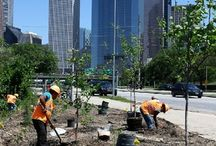 Urban Nature / Urban Trees, urban forests, community forests, urban nature issues
