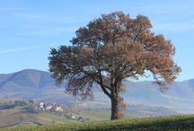 Fabriano natura / Nella nostra zona ci sono degli scorci meravigliosi, paesaggi incantati.....