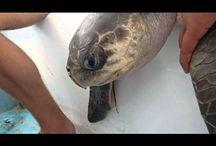 Marine Ecosystem / Plastic is Progressively Destroying the Marine Ecosystem