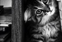 Γατες - γατακια