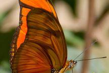 Butterfly & ...